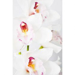 kortti orkidea
