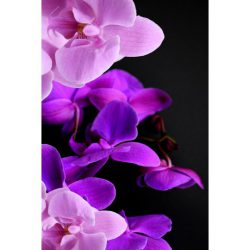 Taidekortti orkidea